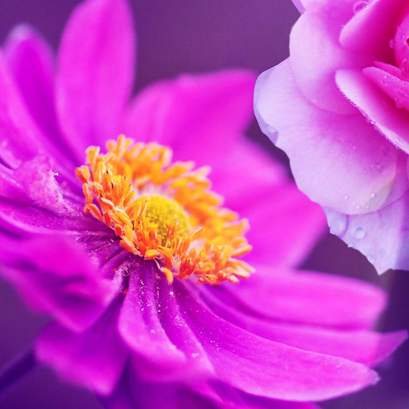 sara estelle essentially flowers icon